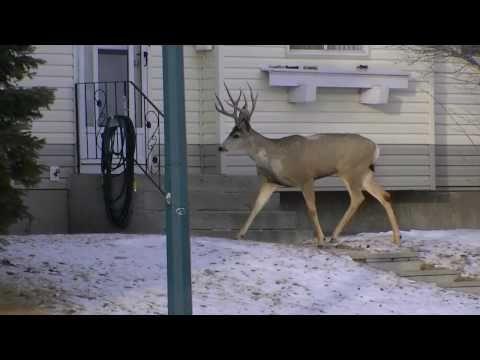 Forex life by deer