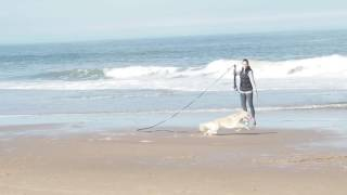 Doggie Fun on Bethany Beach