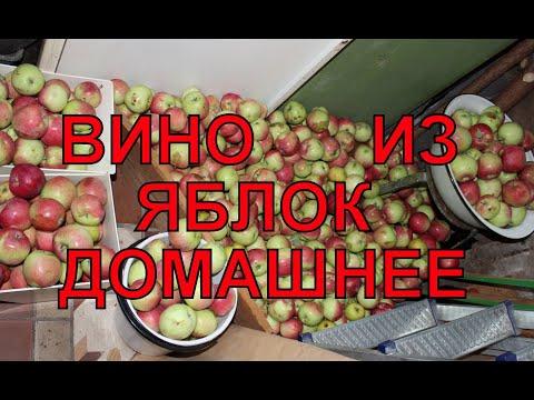 Как в домашних условиях делать вино из яблок в домашних условиях