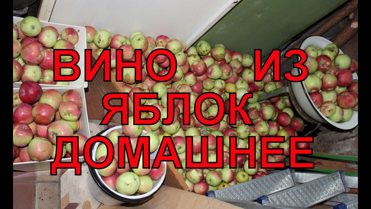 Брага из яблок для самогона: 5 рецептов в домашних условиях 26