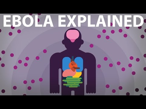 The Ebola Virus Explained — How Your Body Fights For Survival