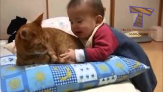 Funny babies annoying cats   Cute cat & baby compilation