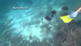 пираньи рыбы фото