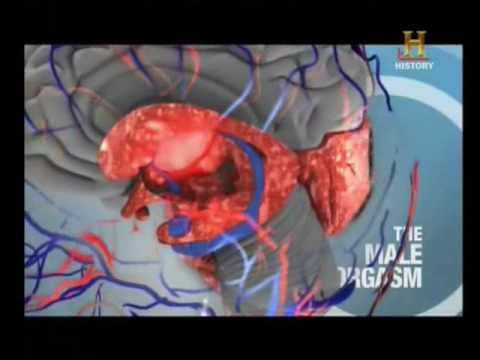 Dopamine - Male Vs Female Orgasms video