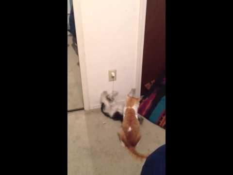My dog got he's butt kicked