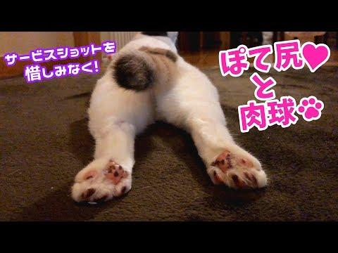 魅惑のプリケツと肉球を見せつける貓
