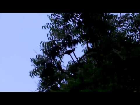 Globe Drifters: Night Birds of Melaka, Malaysia