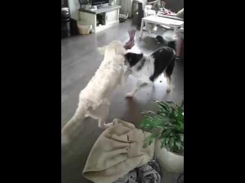 Axel en Dash aan het spelen.