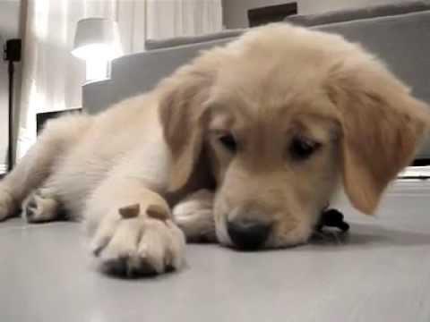 un cane molto carino e molto educato ( video divertentissimi) (ITA – ENG)