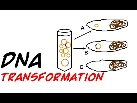 DNA transformation in bacteria