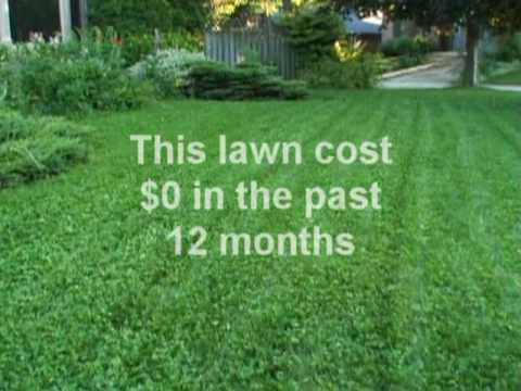 Creeping Red Fescue Lawn Grass  amazoncom
