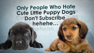 Funny dog videos - My dog the most funniest dog on the world😂