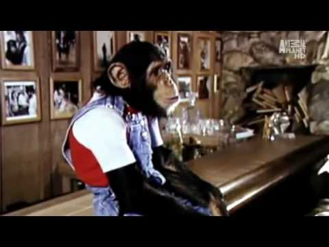 Michael Jackson and Bubbles Animal Planet Documentary Part 3 of 5