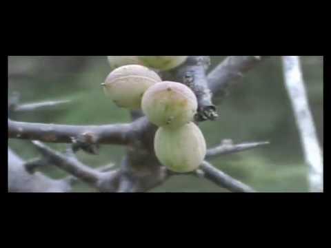 Tamil Short Film A Journey Trailer video