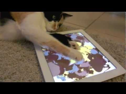 Cat Paints With iPad 2