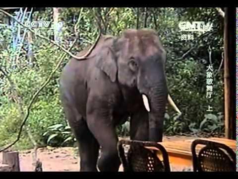 走近科學 大象歌舞廳(上)