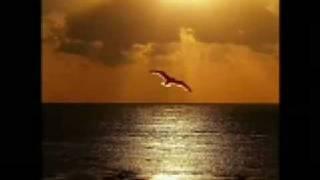 Watch Neil Diamond Canta Libre video