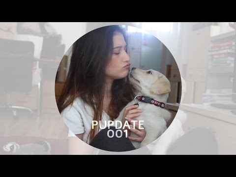 PUPDATE001 | MissReine | פאפדייט001