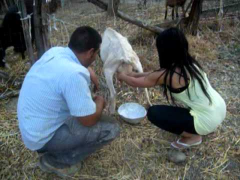 Zoe As Paris Hilton In The Simple Life! Lol Milking A Goat :) video