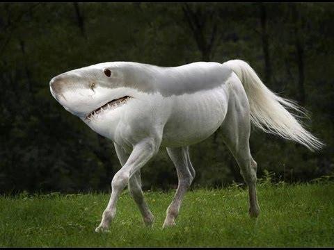 Land Shark Snl Land Shark