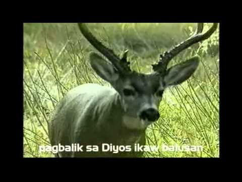 Adlaw nga Mahimayaon - The AsidorS - Vol. 10 Music Videos