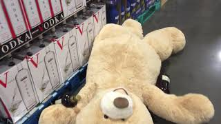 Bernstein bears Costco jamboree gets out of hand FAST