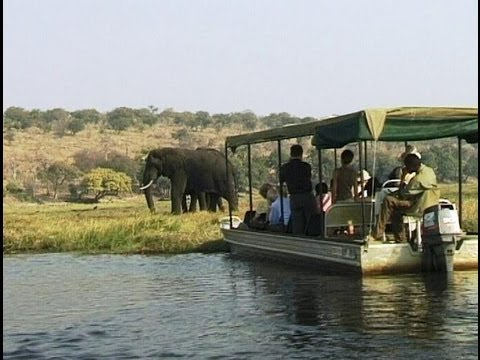 Chobe River boat cruise amongst elephant, hippo and crocodile . Botswana. Travel guide.