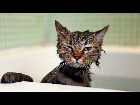 Приколы с котами смешные коты котики приколы про котов до слёз смешные кошки лучшие приколы 2017