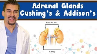 Adrenal glands: Cushing