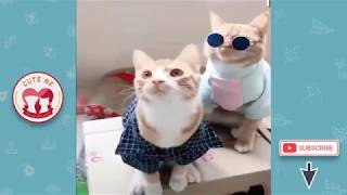 🤣 Funny Dogs and Cats - Awesome Funny Pet Animals Videos 2019