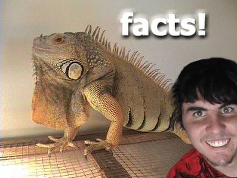 Proper Iguana Care/ Facts Video