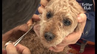 Stolen Dog Found With Scars In His Body | Animal in Crisis EP19