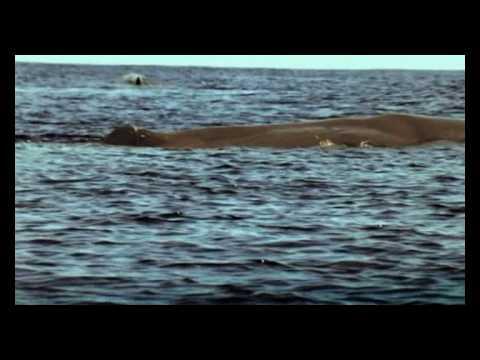 اسرار المحيط, حوت العنبر, الحلقة 1 (مترجم) الجزء الثاني