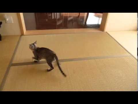 Кот попал в ловушку