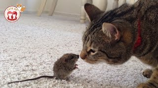 Curious Cats Vs Mouses for the first time - Funny Videos AZ