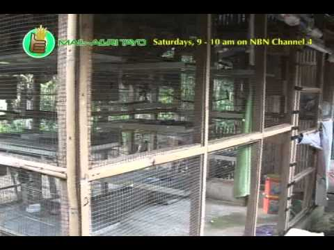 Rabbit & Parakeet Breeding