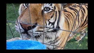 Tigers can also be sad , will miss him .