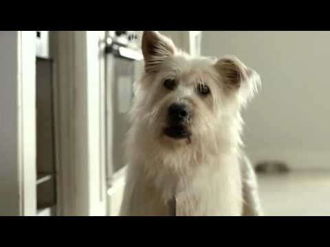 Travelers Insurance - Puppy Love (Dog Commercial) (Low).webm