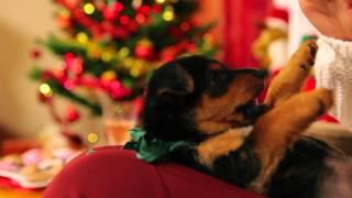 Želja božićna