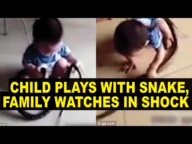 HUGE Snake Invades Home, Toddler Plays With it While Parents Do NOTHING But Films