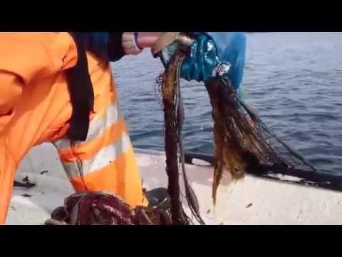 рыбалка в мысовке на луке