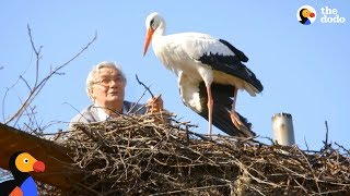 Man Does Everything For His Rescued Stork -  KLEPETAN & MALENA | The Dodo