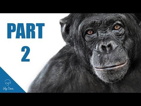 ANIMAL PORTRAIT RETOUCH Part 2 (Photoshop) #61