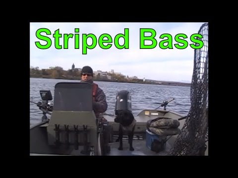 Striper Fishing On The Saint John River, Fredericton, New Brunswick