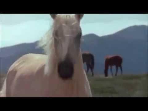 Shadows - Mustang