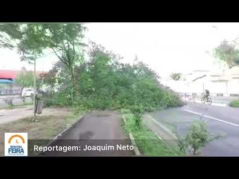 Árvore cai na avenida Fraga Maia; ninguém ficou ferido