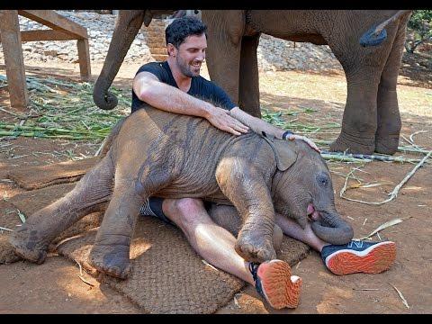 Thailand - Baby Elephants & Patara Elephant Farm