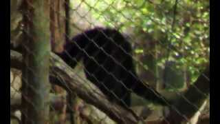 Download video 80's looks ragunan zoo