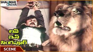 Love in Singapore Movie    Ranganath Try To Save Chiranjeevi From Lion    Ranganath   Shalimarcinema