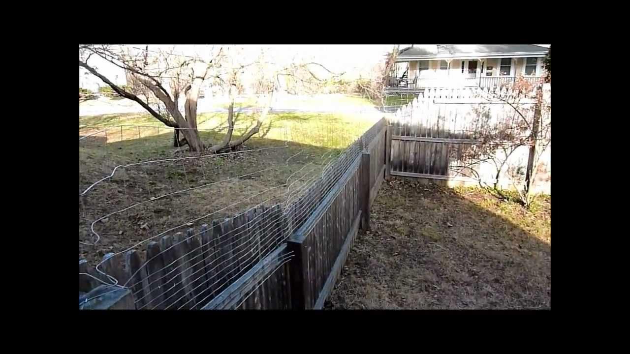 Dog Fence Gate
